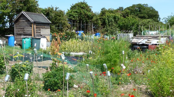Allotments in the summer.