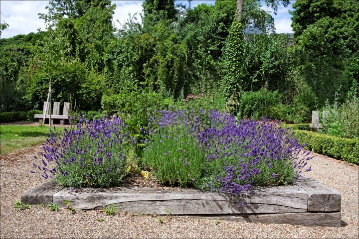 Lavender at the Secret Garden.