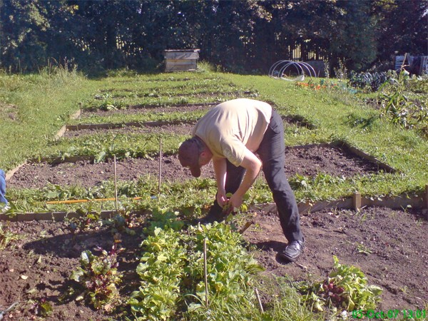 Man working the ground at an allotment